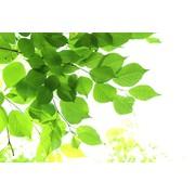 【ホワイトティー&タイム】フレグランスデュフューザー詰め替えカートリッジ (1562) セントエアー社芳香剤/ユニリースフレグランス(正規代理店)